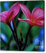 Tropical Colour Canvas Print