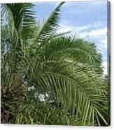 Tropical Days Canvas Print