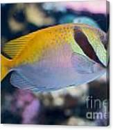Tropical Fish Canvas Print