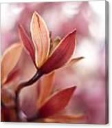 Tropical Grace Canvas Print