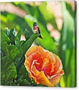Tropical Hummer Canvas Print