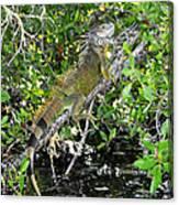 Tropical Iguana Canvas Print