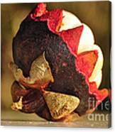 Tropical Mangosteen - The Medicinal Fruit Canvas Print