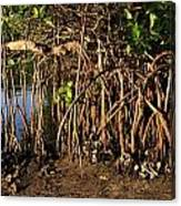 Tropical Mangroves Canvas Print