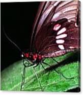 Tropical Rainforest Butterfly Canvas Print