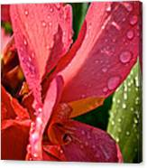Tropical Rose Canna Lily Canvas Print