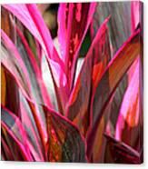 Tropical Vision II Canvas Print