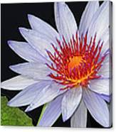 Tropical Waterlily Canvas Print