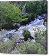 Trout Creek Canvas Print