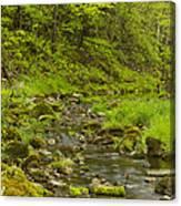Trout Run Creek 4 Canvas Print