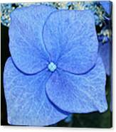 True Blue. Canvas Print