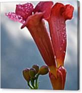 Trumpet Vine Floral Canvas Print