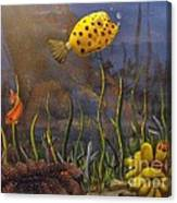 Trunkfish And Anemone Fish Canvas Print