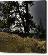 Tubbs Hill On Lake Cd'a Canvas Print