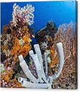 Tube Sponge On Coral Reef In Raja Canvas Print