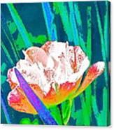 Tulip 45 Canvas Print