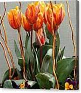 Tulip Arrangement Canvas Print
