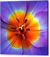 Tulip At Sunset Macro Canvas Print