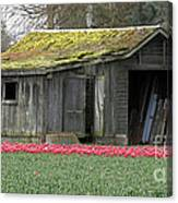 Tulip Barn Canvas Print