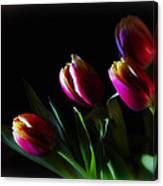 Tulip Dream Canvas Print