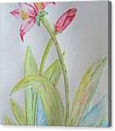 Tulip Duo II Canvas Print