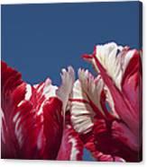 Tulip Estella Reinfeld Canvas Print