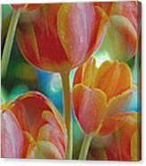 Tulip Fascination Canvas Print