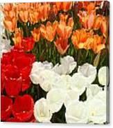 Tulip Flowers Festival Art Prints Floral Baslee Canvas Print