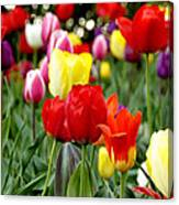 Tulip Garden University Of Pittsburgh  Canvas Print