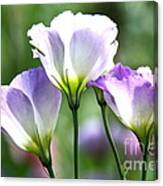 Tulip Gentian Flowers Canvas Print