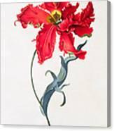Tulip Perroquet Rouge Canvas Print