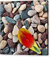 Tulip Petal And Wet Stones Canvas Print