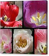 Tulip Sampler Canvas Print