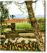 Tulip Time In The Skagit Valley Canvas Print