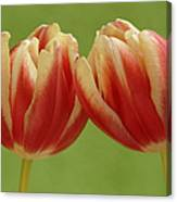 Tulip Tulipa Sp Pair, Hoogeloon Canvas Print