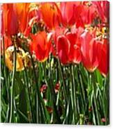 Tulip Uprising Canvas Print