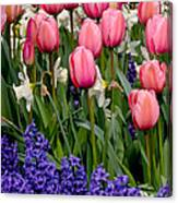 Tulips And Friends Canvas Print