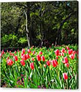 Tulips And Woods Canvas Print