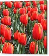 Tulips At Boston Public Garden Canvas Print