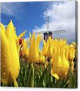 Tulips In A Field And A Windmill At Canvas Print