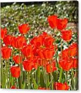 Tulips In The Field Canvas Print