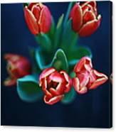 Tulips On Black Canvas Print