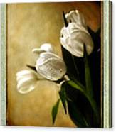 Tulips Side Sepia Canvas Print