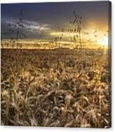 Tumble Wheat Canvas Print