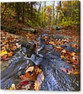 Tumbling Leaves Canvas Print