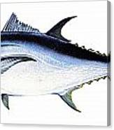 Tuna Canvas Print
