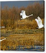 Tundra Flight Canvas Print