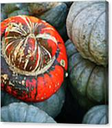 Turban Pumpkin Canvas Print