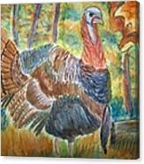 Turkey In Fall Canvas Print
