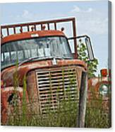 Turned Out To Pasture Canvas Print